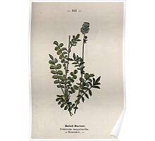 Wayside and woodland blossoms a pocket guide to British wild flowers for the country rambler  by Edward Step 1895 111 Salad Burnet Poster
