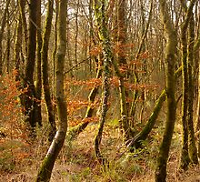 The Woods on East Hill by Mike  Waldron
