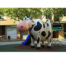 Playgroung cow Photographic Print