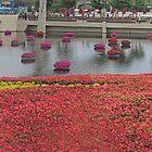 A Panorama of Color!  by John  Kapusta