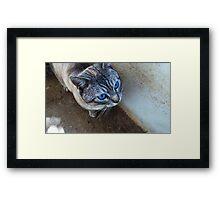 Blue eyed Framed Print