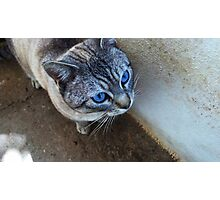 Blue eyed Photographic Print