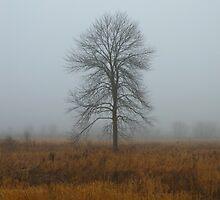 Tree in Fog by Timothy  Ruf