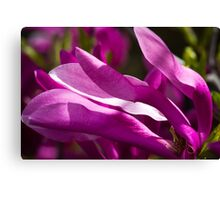 Magnolia Wind Canvas Print