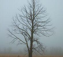 Lone Tree in Fog by Timothy  Ruf