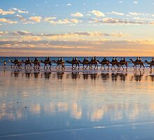 sunset camel broome by Elliot62