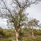 Tree by Werner Padarin