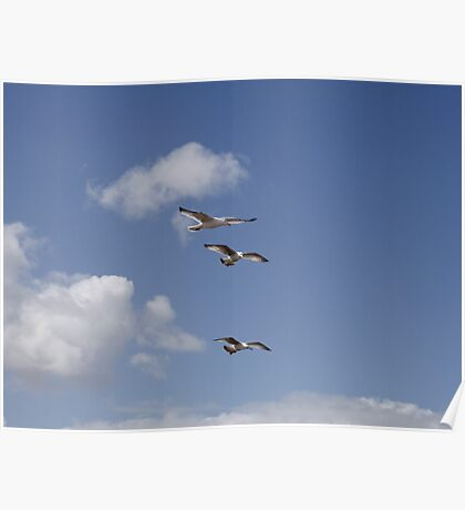 Three Gulls in stacked flight Poster