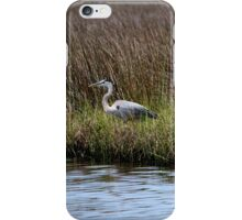 Blue Heron in the Grass iPhone Case/Skin