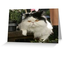 The Magnificats Norman Card #2 Greeting Card
