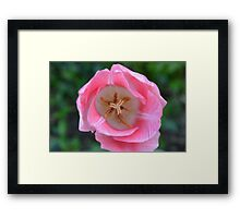 A tulip to make you happy:) Framed Print