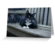 The Magnificats Rocky Card #2 Greeting Card