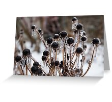 Toronto Ice Storm 2013 - Frozen Black Eyed Susans  Greeting Card