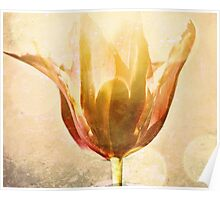 The Lotus Blossom A Collaboration with the Beautiful Linda McCarthy Poster