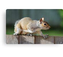 Creeping Squirrel Canvas Print