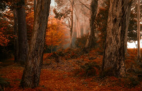 Come To Me -Mount Wilson NSW - The HDR Experience by Philip Johnson