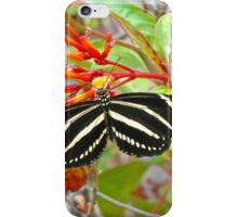 Zebra Longwing  iPhone Case/Skin