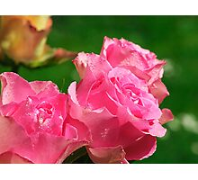 Raindrops on Roses..... Photographic Print