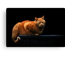 Marmalade on the work top Canvas Print