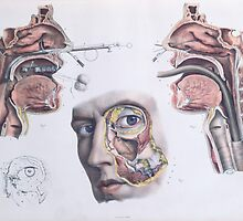 A Nasal Operation by Bridgeman Art Library