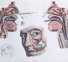 A Nasal Operation by Bridgeman Art Library