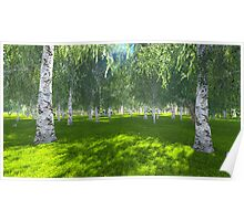 Sunny day in the birch grove Poster