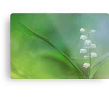 Lily of the Valley... Metal Print