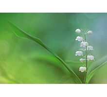Lily of the Valley... Photographic Print