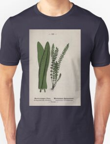 Wayside and woodland blossoms a pocket guide to British wild flowers for the country rambler  by Edward Step 1895 123 Hart's Tongue Fern Maidenhair Spleenwort T-Shirt