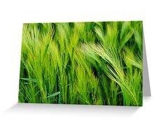 Vivid Golden Green Greeting Card