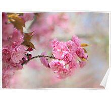 Soft Cherry Poster
