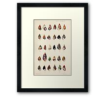 Proceedings of the Zoological Society of London 1848 - 1860 V5 Mollusca 022 Framed Print