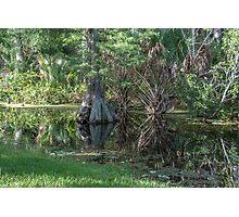 Swamp Reflections Photographic Print