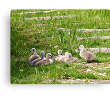 Follow the Parents... Canvas Print