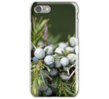 Juniperus berries on a tree iPhone Case/Skin