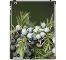 Juniperus berries on a tree iPad Case/Skin