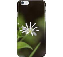 Flower of a wood stitchwort iPhone Case/Skin