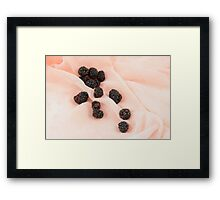 Blackberries Framed Print