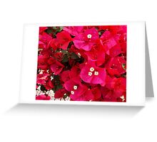 Pinky Greeting Card