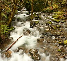 Fall Creek, Umpqua Valley by Chappy