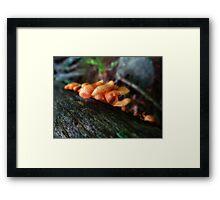 Mystery Mushrooms Framed Print