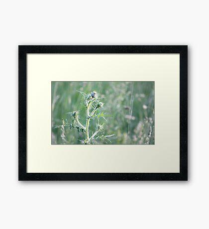 Spring Sunset on Bull Thistle Framed Print