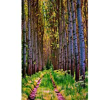 FOREST Photographic Print