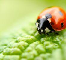 ladybug red green Sticker
