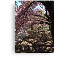 Cherry Blossom, Japan Canvas Print