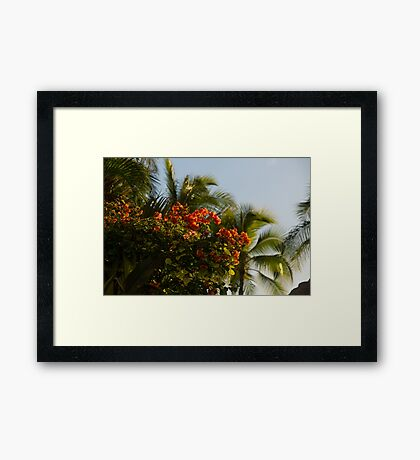 Bougainvilleas and Palm Trees Swaying in the Wind in Waikiki, Honolulu, Hawaii Framed Print