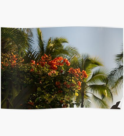 Bougainvilleas and Palm Trees Swaying in the Wind in Waikiki, Honolulu, Hawaii Poster
