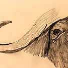 Cape Buffalo by aprilann