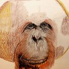 Male Orangutan by aprilann