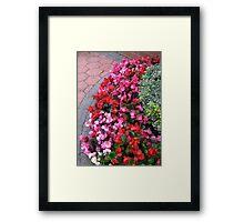 A Multitude of Begonias Framed Print